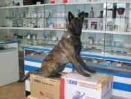 Přejímka nového zboží pro psy